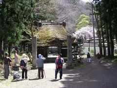 Inawasirosakura0904b