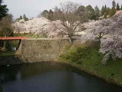 Sakura1204b