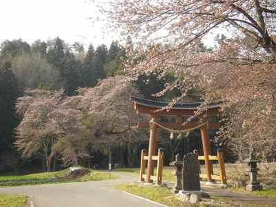 Sakura1204d