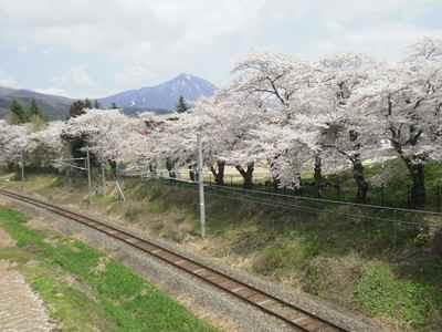 Sakura1205a