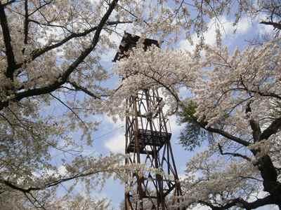 Sakura1205b