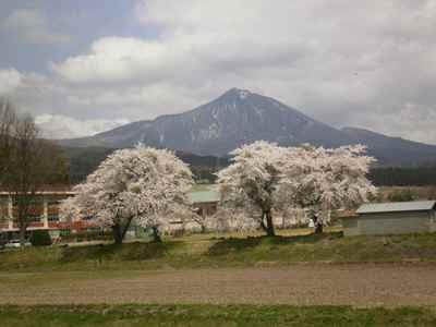 Sakura1205c