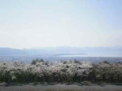 Sakura1205e_2