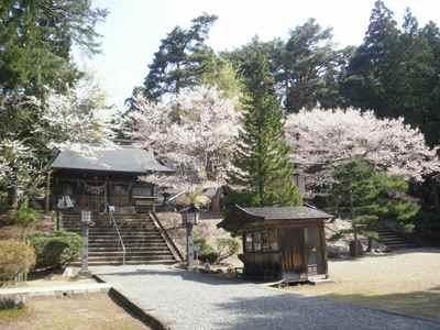 Sakura1205g