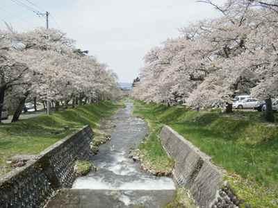 Sakura1205j_2